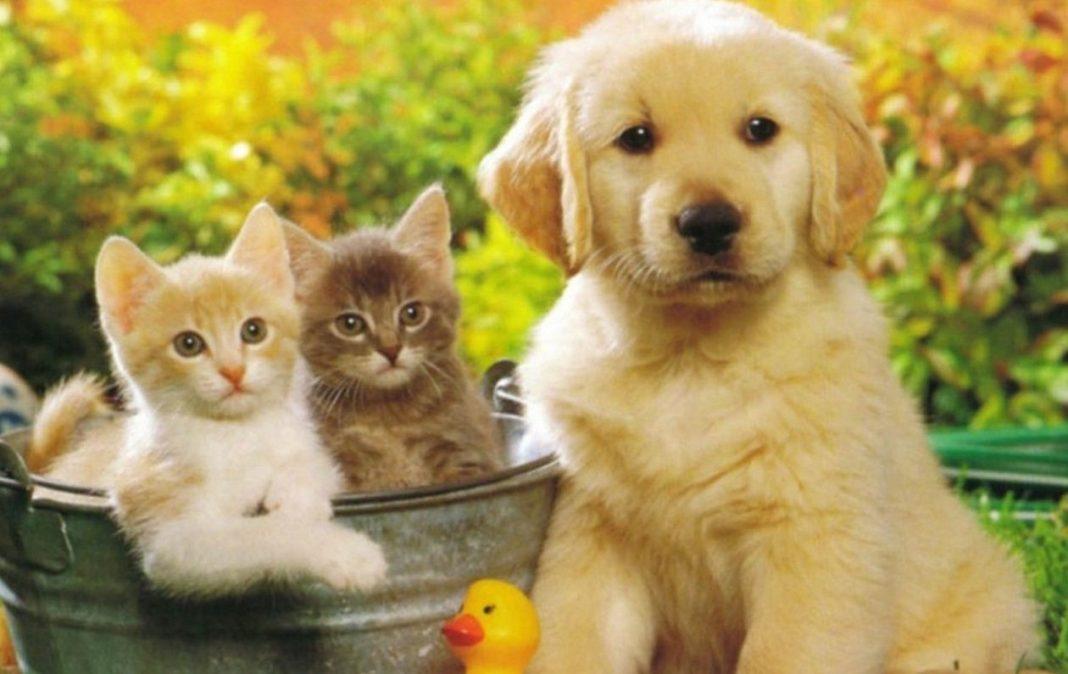 разведение домашних животных