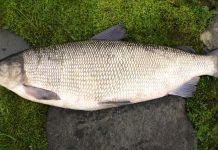 доставка свежей рыбы