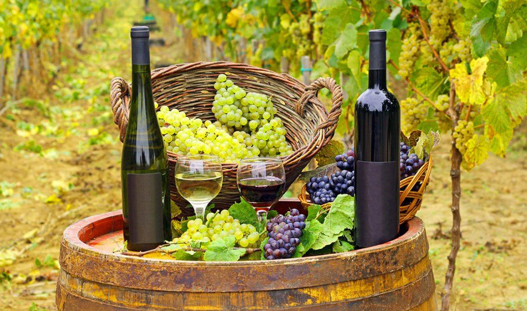 как стать виноделом