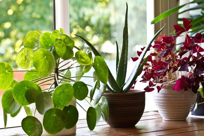 гостиница для растений как бизнес