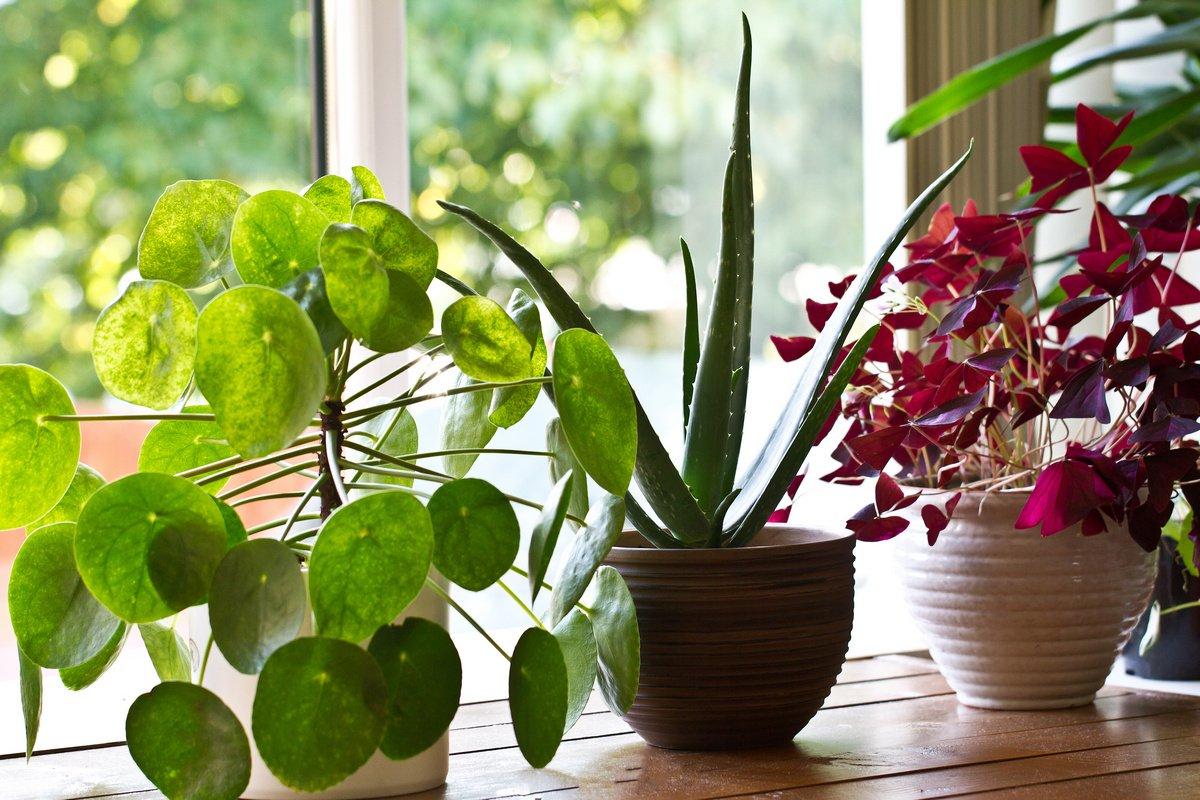 Бизнес идея – гостиница для растений